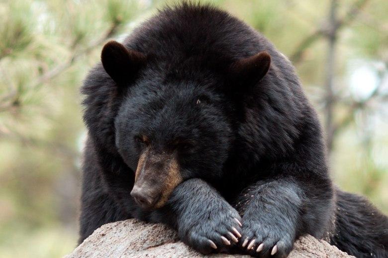 bearscare1