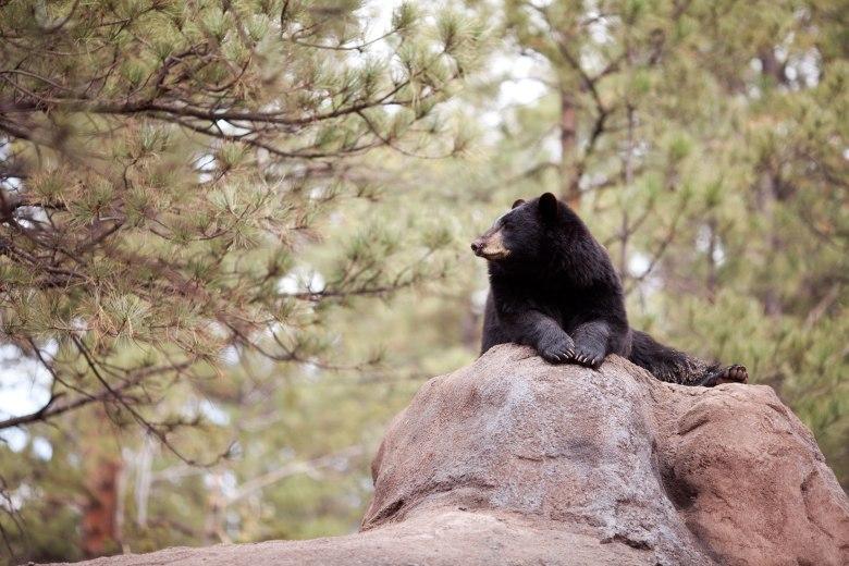 bearscare3