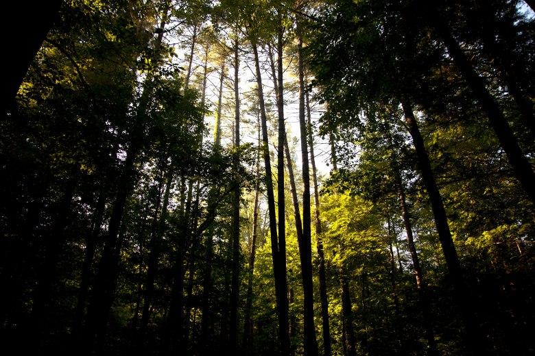 smoky-woods